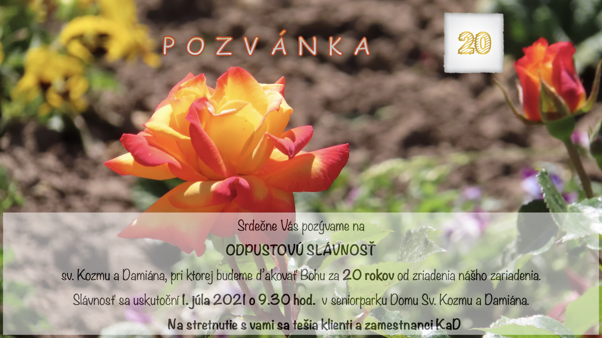 ruza-nadherna-.001